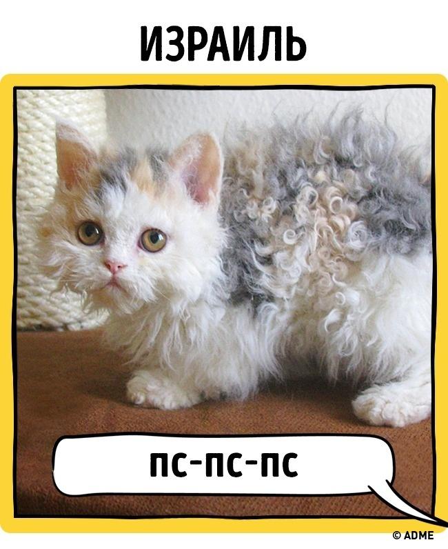 Как в разных странах подзывают кошек рис 14