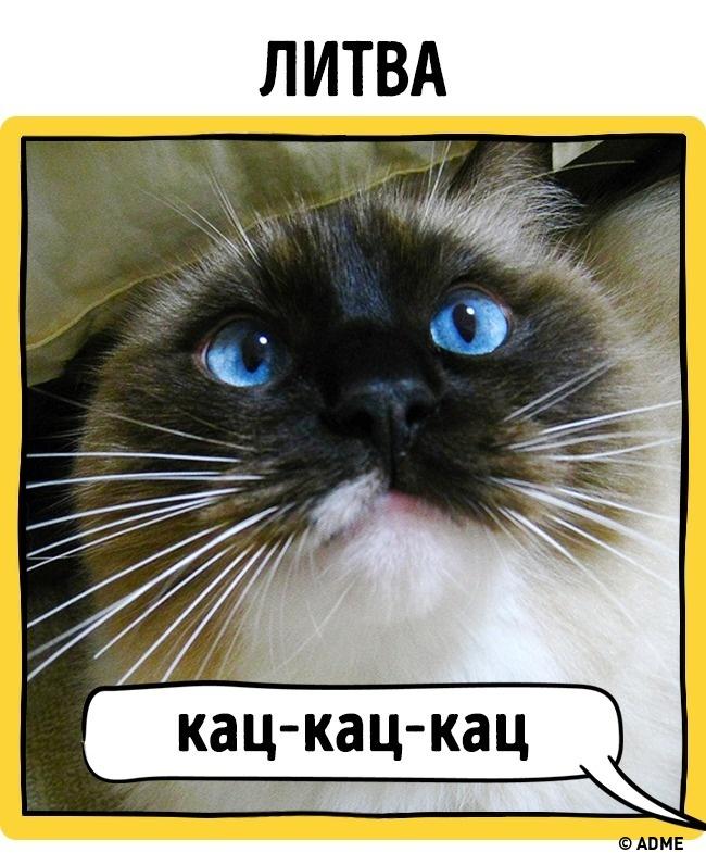 Как в разных странах подзывают кошек рис 15