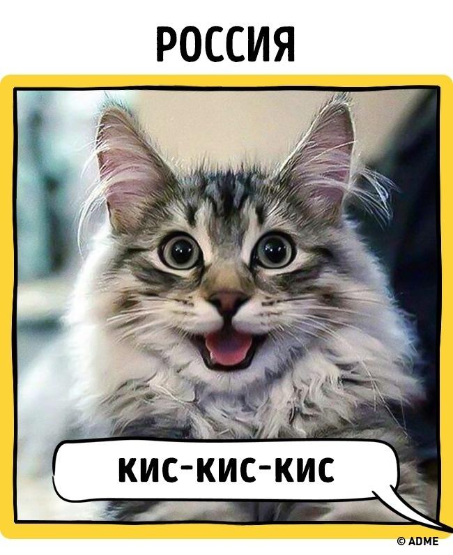Как в разных странах подзывают кошек рис 17