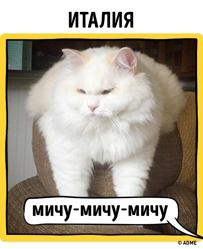 Как в разных странах подзывают кошек рис 16