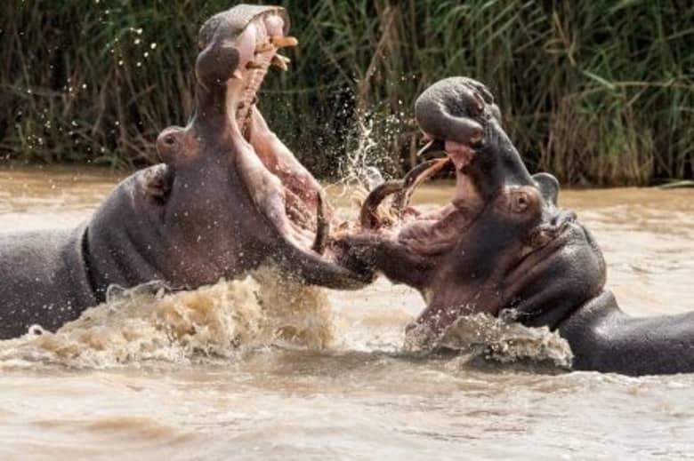 15 самых страшных и опасных животных мира рис 12
