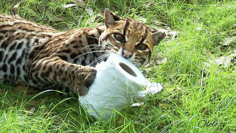 Размер не имеет значения: кошки всегда остаются кошками рис 12
