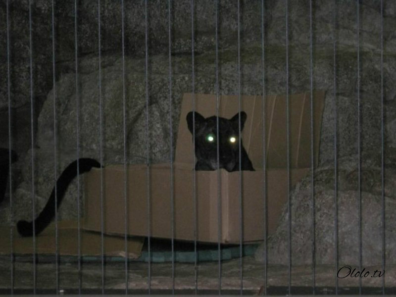 Размер не имеет значения: кошки всегда остаются кошками рис 4