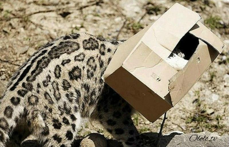 Размер не имеет значения: кошки всегда остаются кошками рис 6