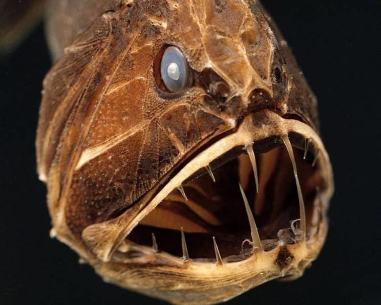 15 самых страшных и опасных животных мира