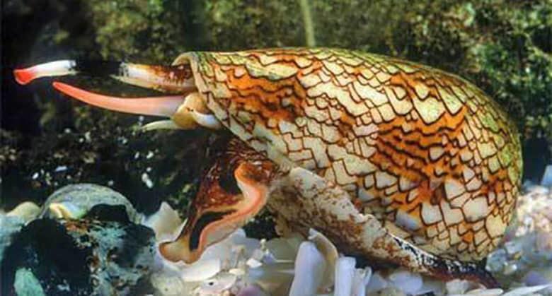 15 самых страшных и опасных животных мира рис 14