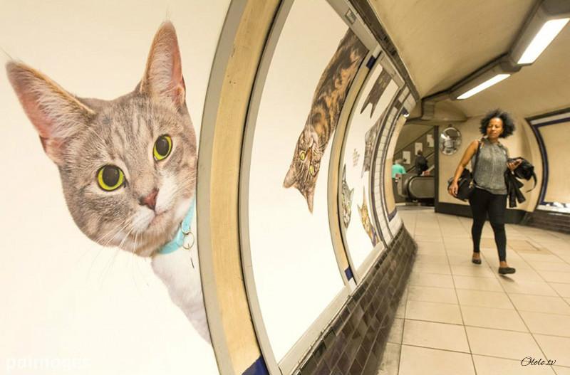 Жители Лондона выкупили все рекламные объявления на станции метро и заменили их на котиков рис 9