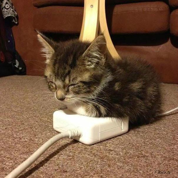 38 забавных доказательств того, что кошки могут уснуть где угодно рис 16