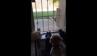 Эти кошки спокойно наблюдали за птицей, но тут пришла собака