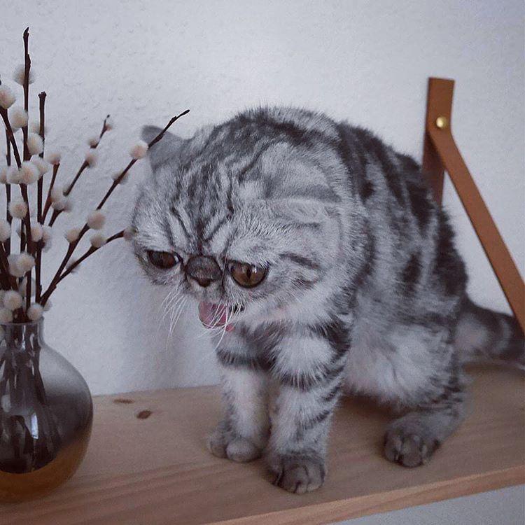 У этого кота просто гигантские шары! рис 3