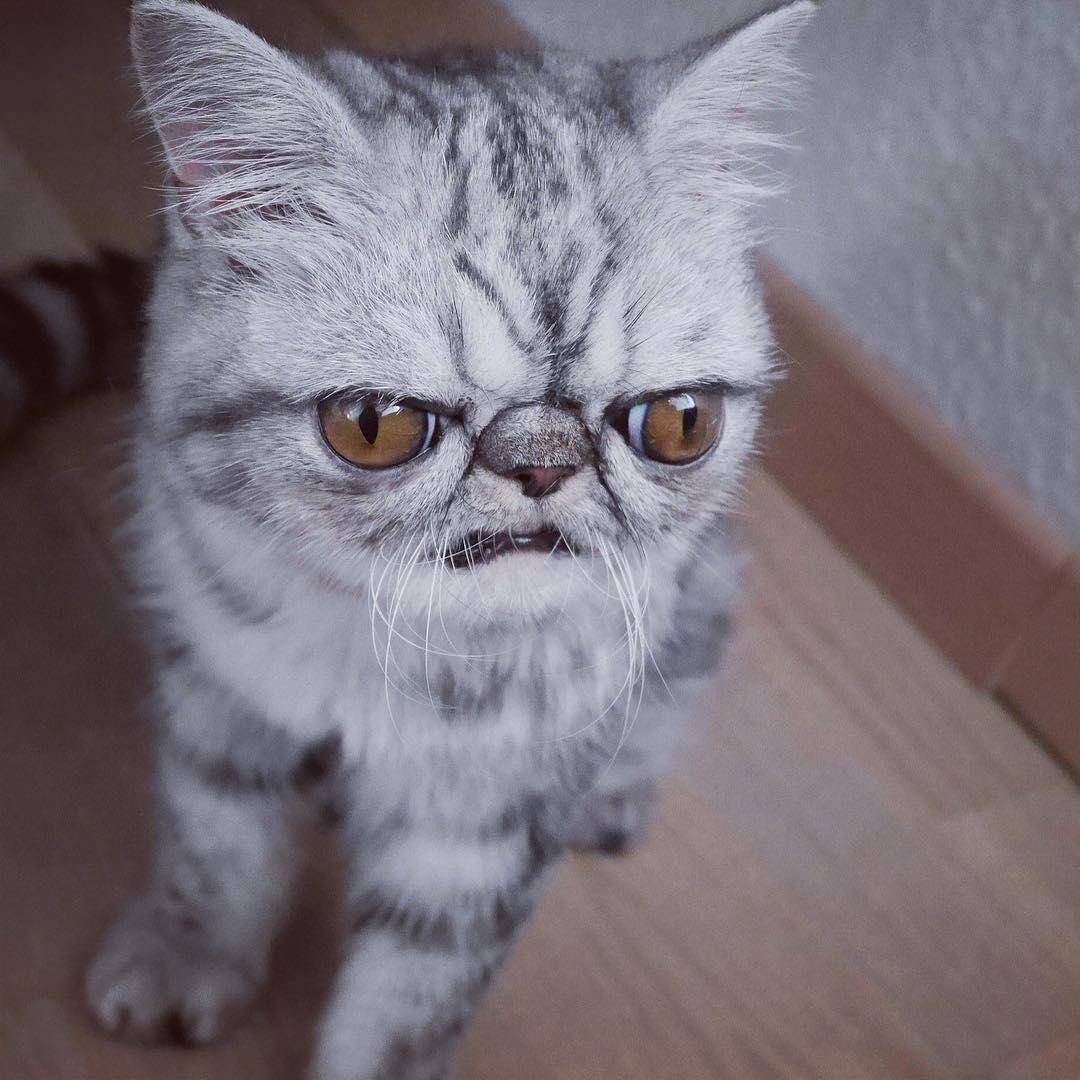 У этого кота просто гигантские шары!
