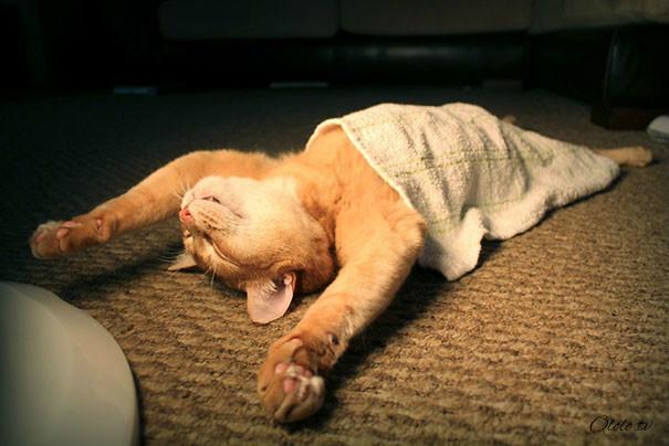 38 забавных доказательств того, что кошки могут уснуть где угодно рис 25