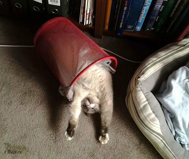 38 забавных доказательств того, что кошки могут уснуть где угодно рис 37