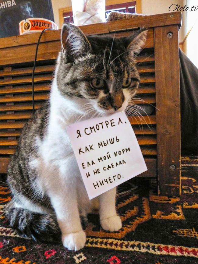 15 причин понять и простить кота рис 15
