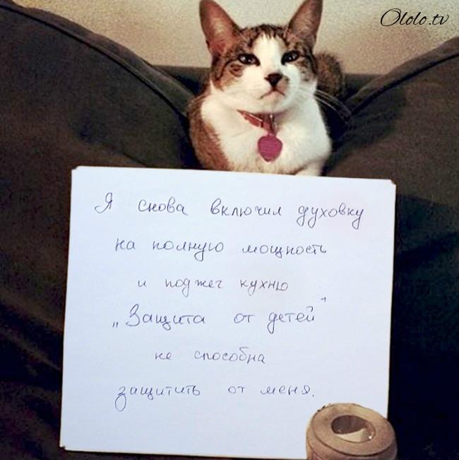 15 причин понять и простить кота рис 14