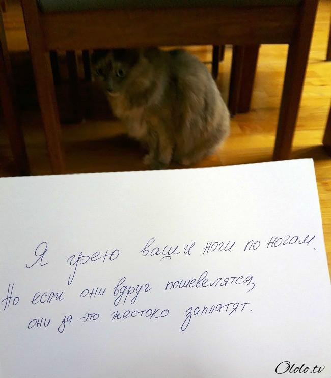 15 причин понять и простить кота рис 13