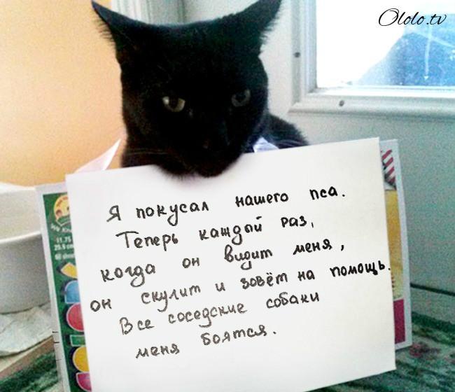 15 причин понять и простить кота рис 11