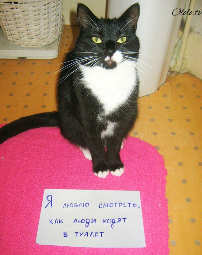 15 причин понять и простить кота рис 10