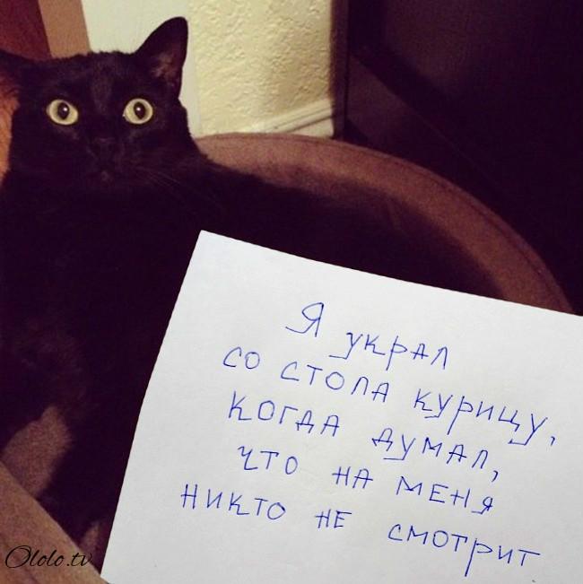 15 причин понять и простить кота рис 9