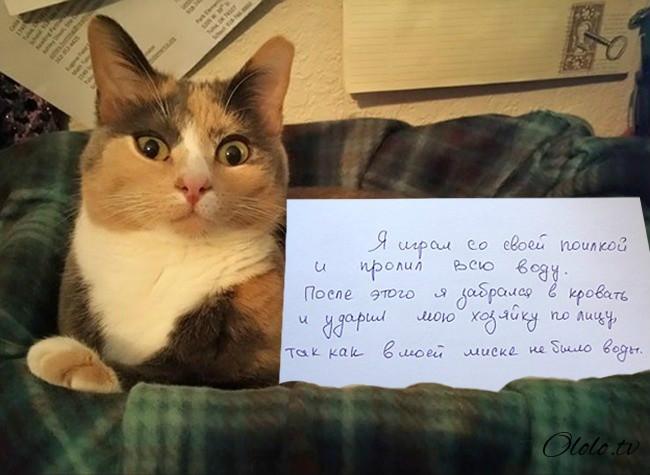 15 причин понять и простить кота рис 8