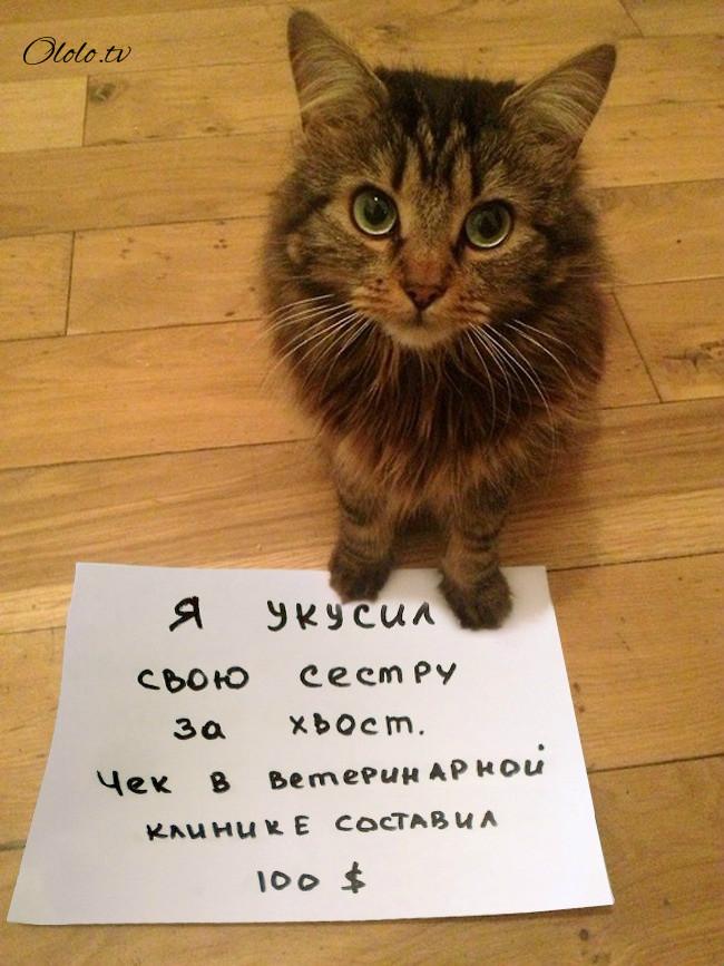 одна смешные коты фото понять и простить училась