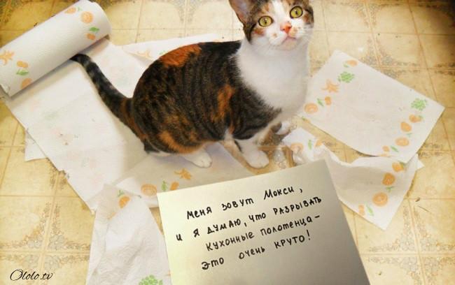 15 причин понять и простить кота рис 6