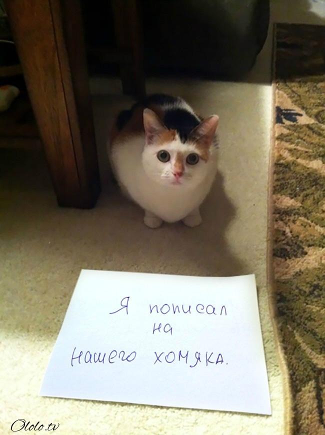 15 причин понять и простить кота рис 5