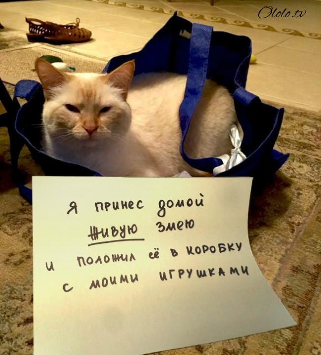 15 причин понять и простить кота рис 3
