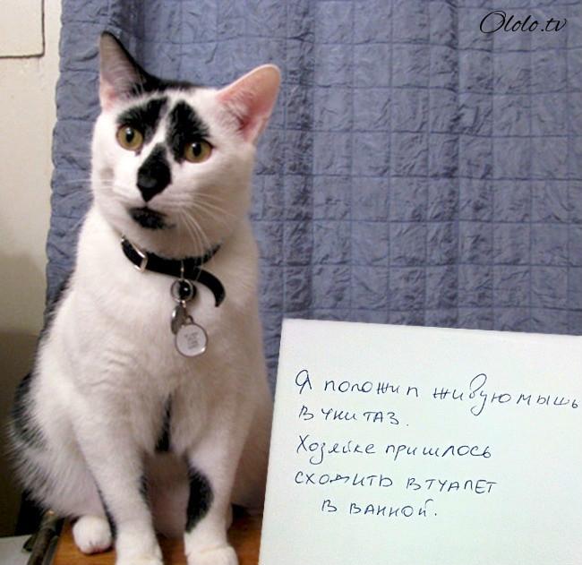 15 причин понять и простить кота рис 2