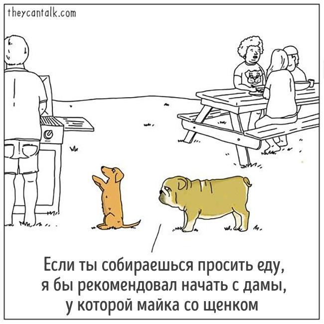 14 комиксов от художника, который, кажется, понимает язык животных