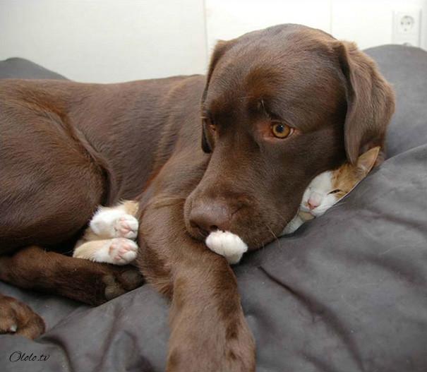 38 забавных доказательств того, что кошки могут уснуть где угодно рис 15