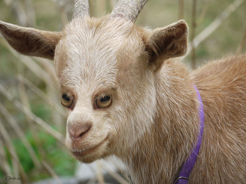 Как бы выглядели животные, если бы их глаза были спереди
