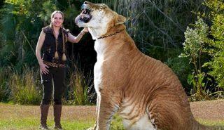 Невероятные животные-гибриды, о которых вы никогда не слышали (14 фото)
