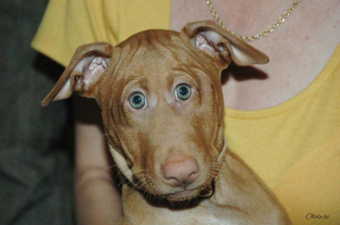 Как бы выглядели животные, если бы их глаза были спереди рис 9