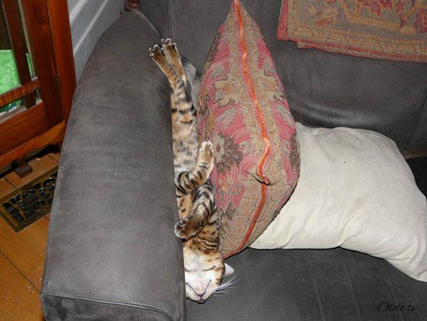 38 забавных доказательств того, что кошки могут уснуть где угодно рис 33