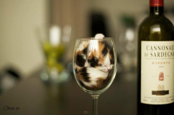 38 забавных доказательств того, что кошки могут уснуть где угодно рис 3