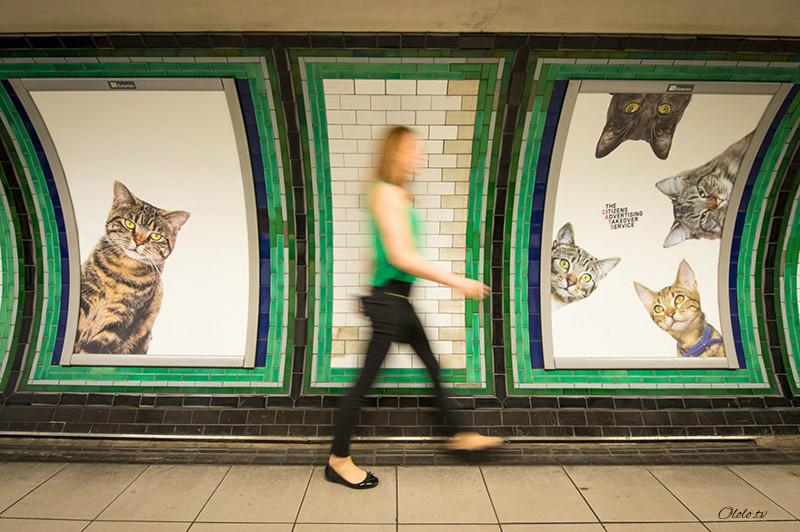 Жители Лондона выкупили все рекламные объявления на станции метро и заменили их на котиков рис 6