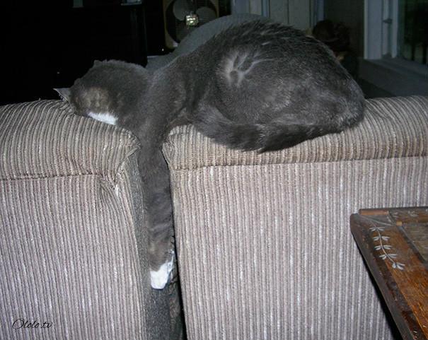 38 забавных доказательств того, что кошки могут уснуть где угодно рис 36