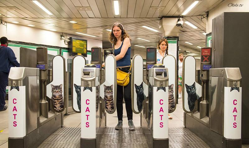Жители Лондона выкупили все рекламные объявления на станции метро и заменили их на котиков рис 8