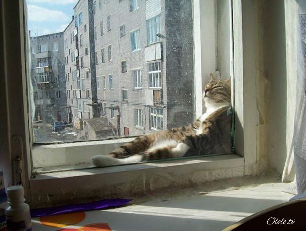 38 забавных доказательств того, что кошки могут уснуть где угодно рис 18