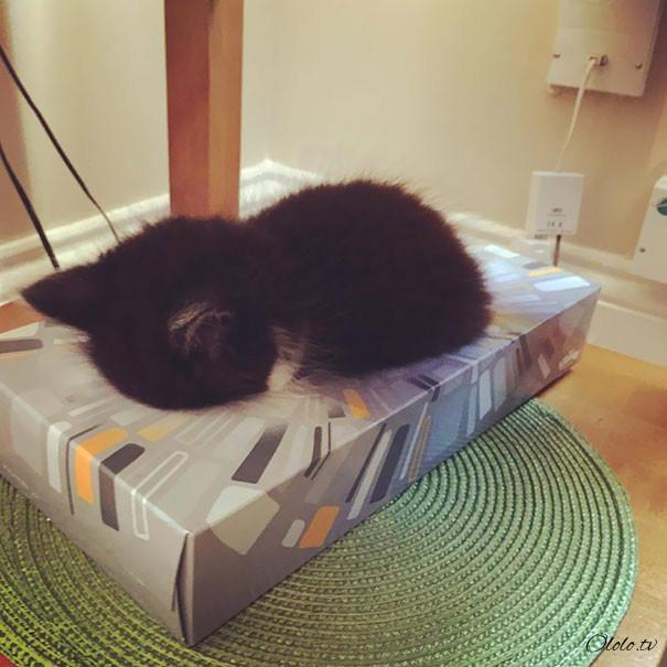 38 забавных доказательств того, что кошки могут уснуть где угодно рис 5