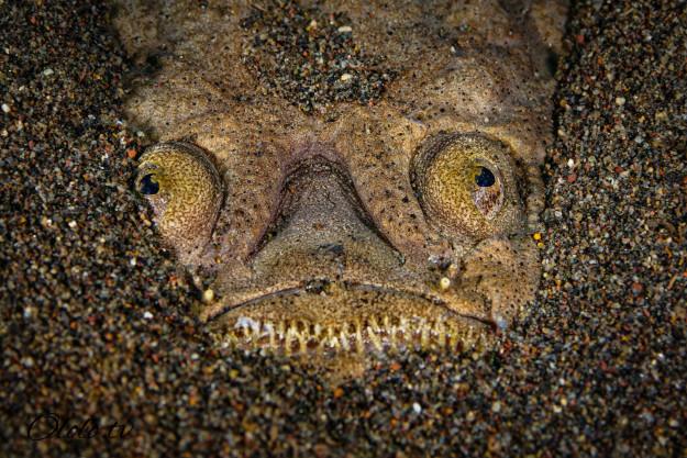 Кто проживает на дне океана? После этого поста у вас появится много вопросов к морским глубинам! рис 15