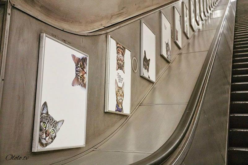 Жители Лондона выкупили все рекламные объявления на станции метро и заменили их на котиков рис 7