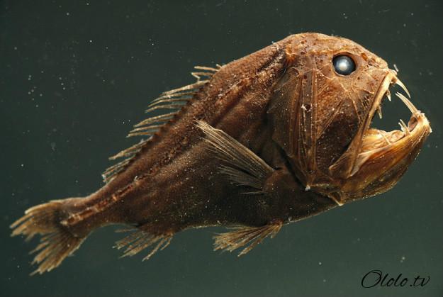 Кто проживает на дне океана? После этого поста у вас появится много вопросов к морским глубинам! рис 3
