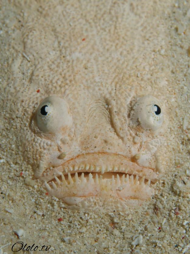 Кто проживает на дне океана? После этого поста у вас появится много вопросов к морским глубинам! рис 14