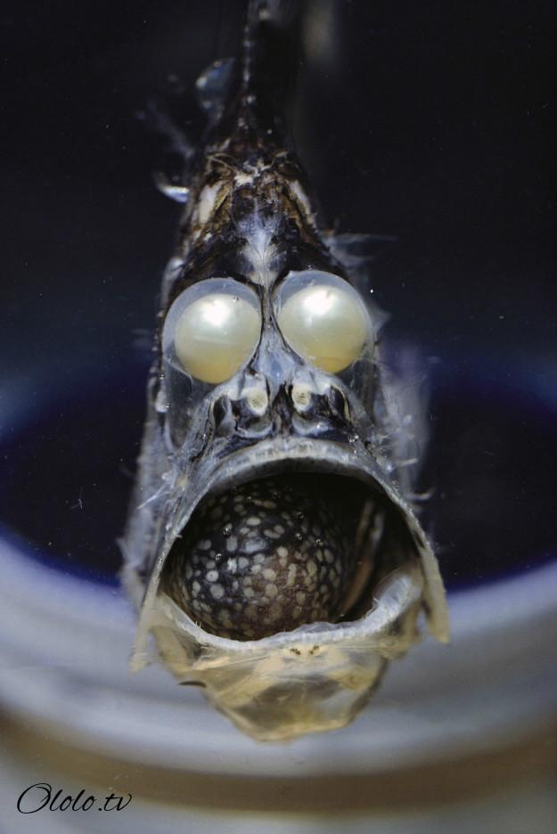 Кто проживает на дне океана? После этого поста у вас появится много вопросов к морским глубинам! рис 7