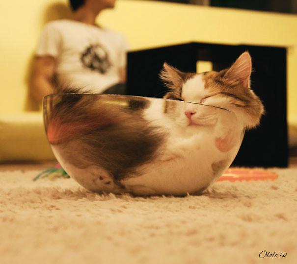 38 забавных доказательств того, что кошки могут уснуть где угодно рис 23