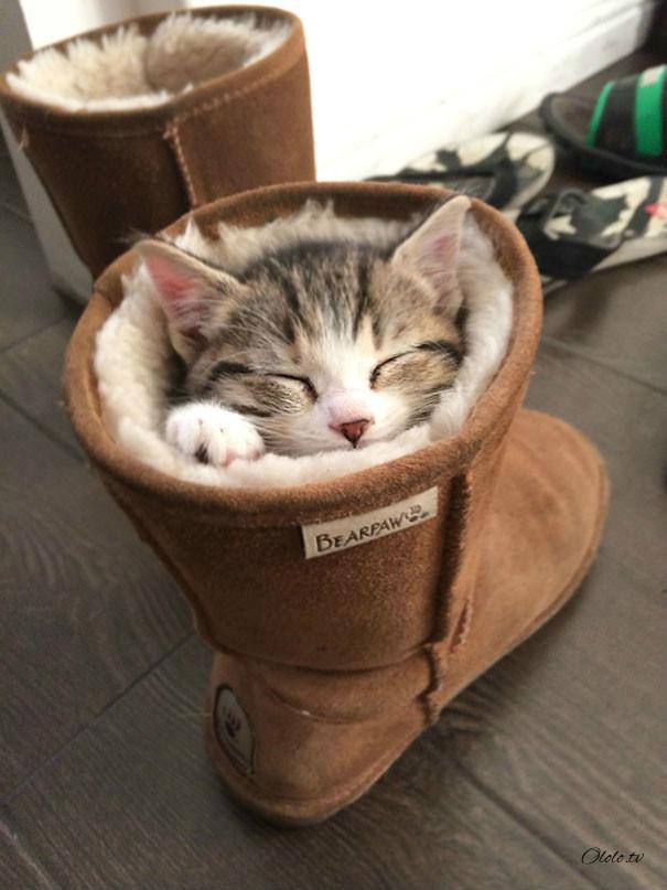 38 забавных доказательств того, что кошки могут уснуть где угодно рис 8