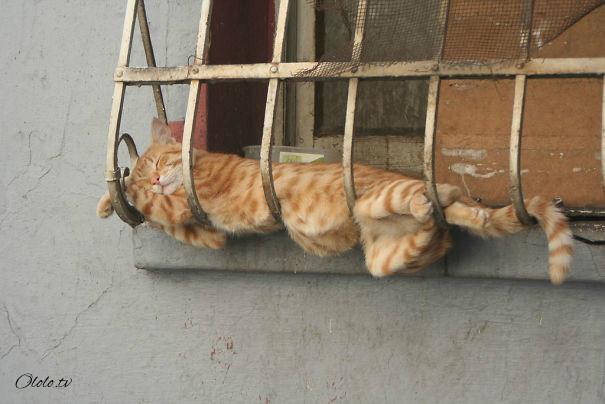 38 забавных доказательств того, что кошки могут уснуть где угодно рис 7