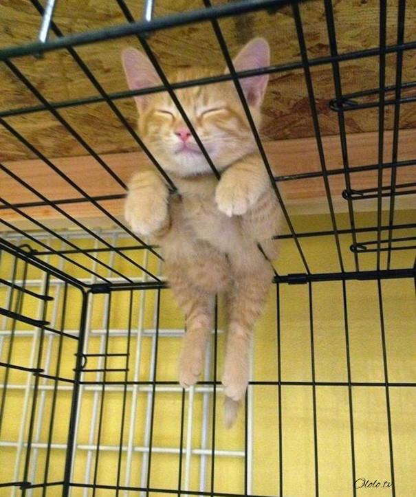 38 забавных доказательств того, что кошки могут уснуть где угодно рис 30